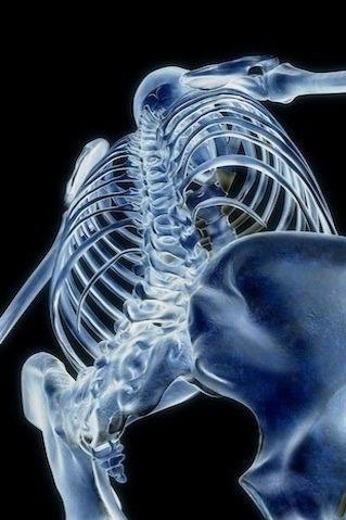 人体骨骼3D图像仰视图
